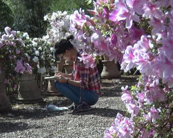 Dopo la bufera rifiorisce l 39 orto botanico attualit firenze for Giardino orto botanico firenze