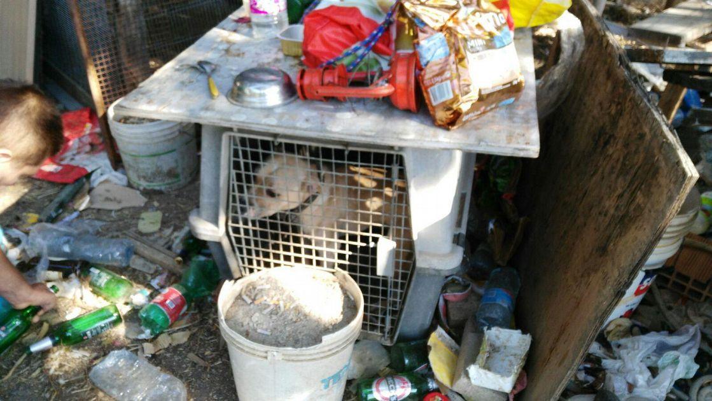 Cani e piccioni rinchiusi senza cibo e acqua cronaca for Cibo tartarughe acqua