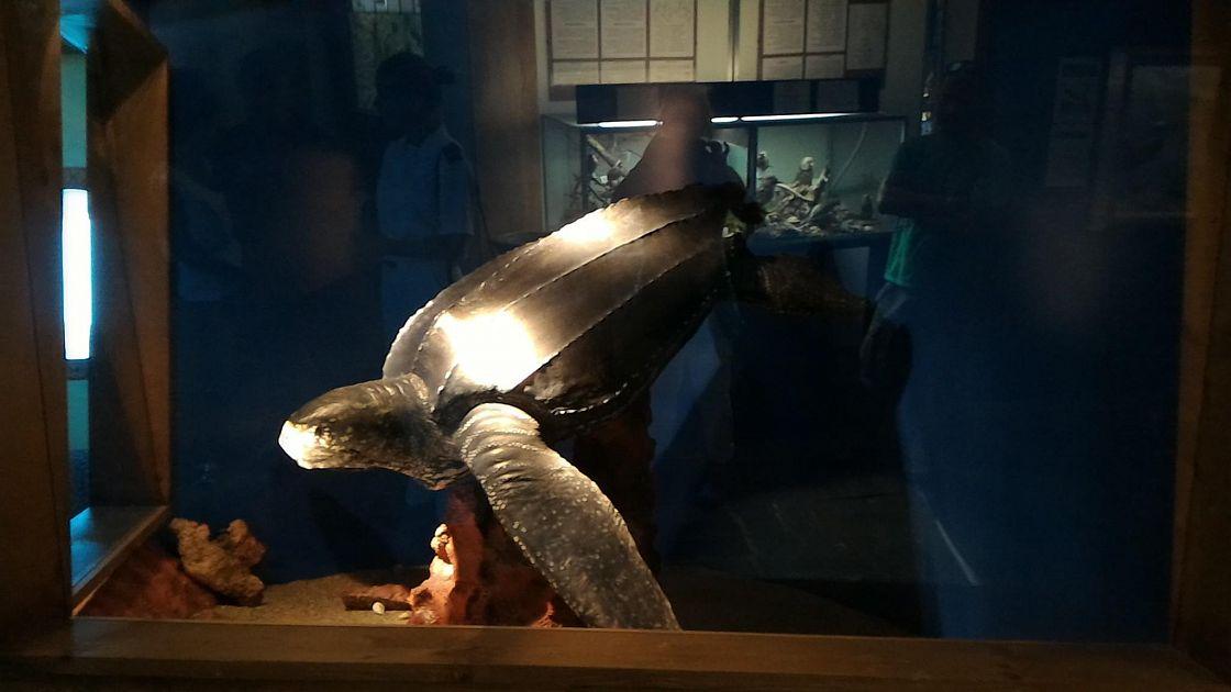 Una tartaruga liuto all acquario dell elba altri campo for Acquario esterno per tartarughe
