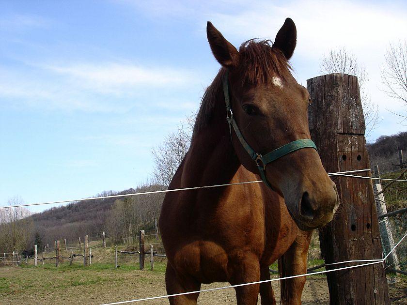 I cavalli sanno riconoscersi allo specchio attualit pisa - Cavalli allo specchio ...