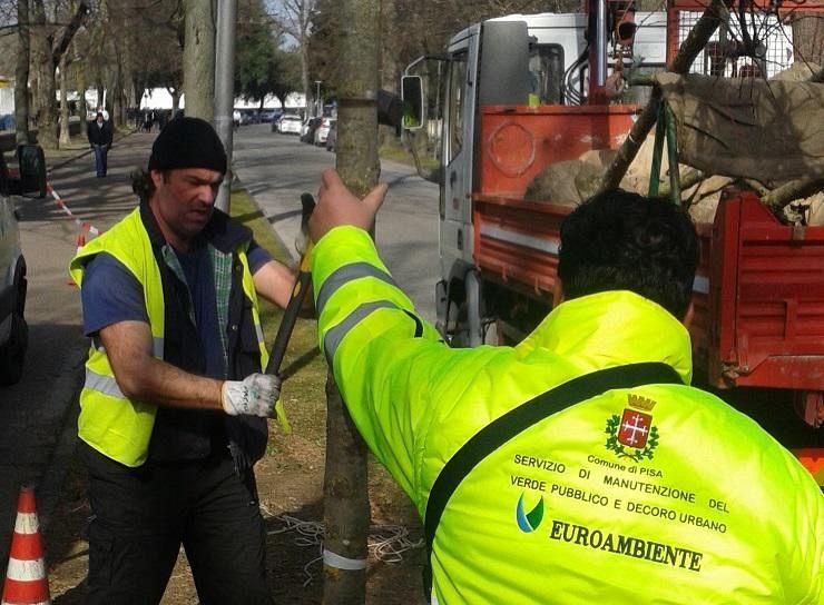 Ufficio Manutenzione Verde Arezzo : Bando del comune per la manutenzione di rotatorie e spazi pubblici