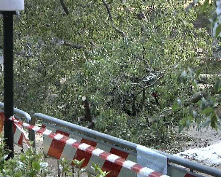 Uccise dal crollo di un ramo gli avvisi di garanzia for Casa sull albero firenze