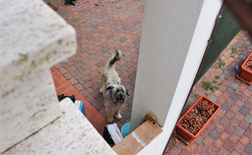 Il cane che abbaia ventiquattro ore al giorno attualit for Cane che abbaia