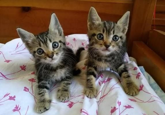 Quattro gattini in cerca di casa attualit cecina for Piccoli piani di casa espandibili