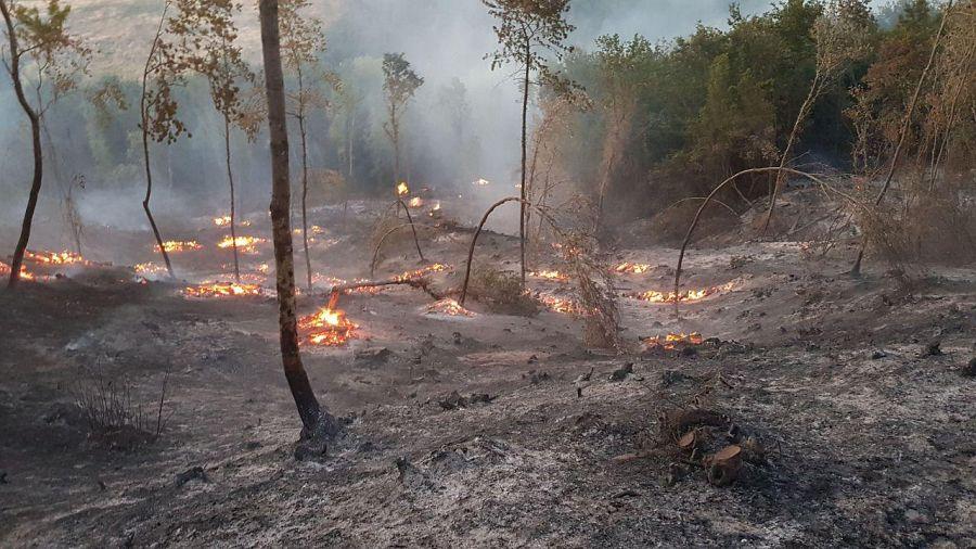 Casciana Terme: bruciato il bosco in zona Sant'Ermo per 25 ettari