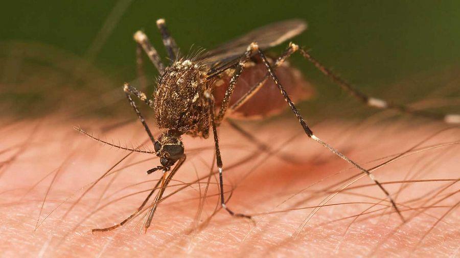 West Nile, nuovo caso nel livornese: caccia alle zanzare e massima allerta