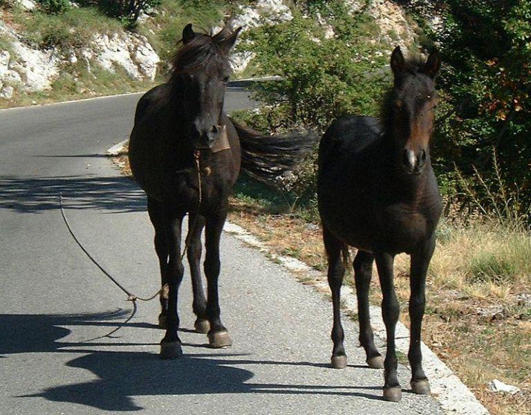 Cavalli sulla francigena altri fucecchio for Piani casa cane trotto