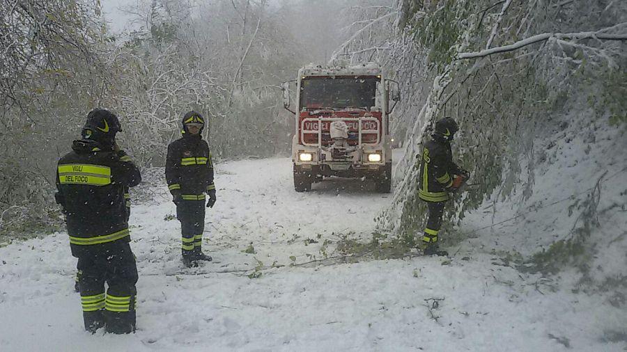 Vento, pioggia e alberi caduti sulle strade: intervengono i vigili del fuoco