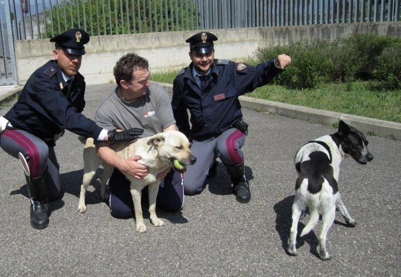 Cani su A1, polstrada li salva