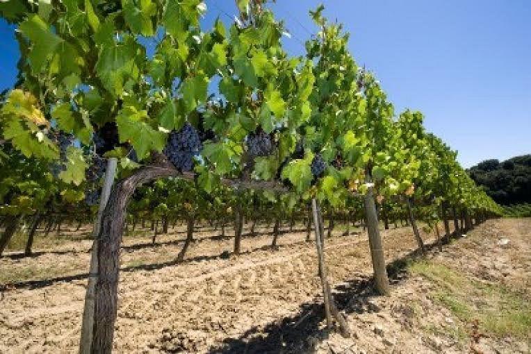 Caporalato: tre arresti in Toscana per sfruttamento lavoratori