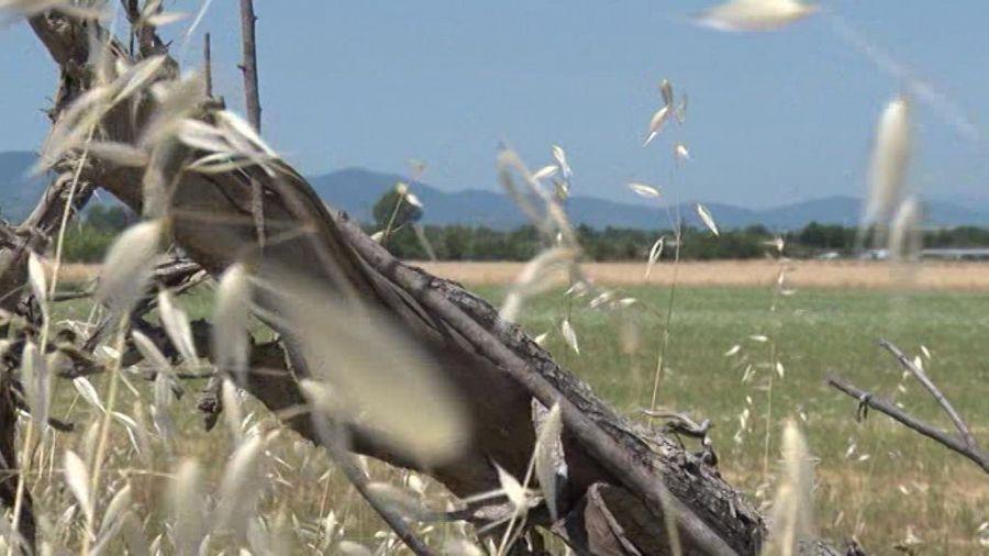 Siccità, mezza Italia a secco: emergenza in 11 regioni