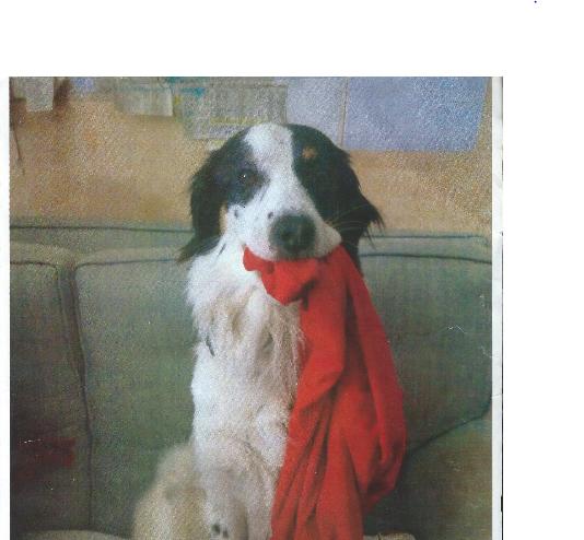 Verso il processo per l 39 uccisione del cane snoopy for Casa progetta il trotto del cane
