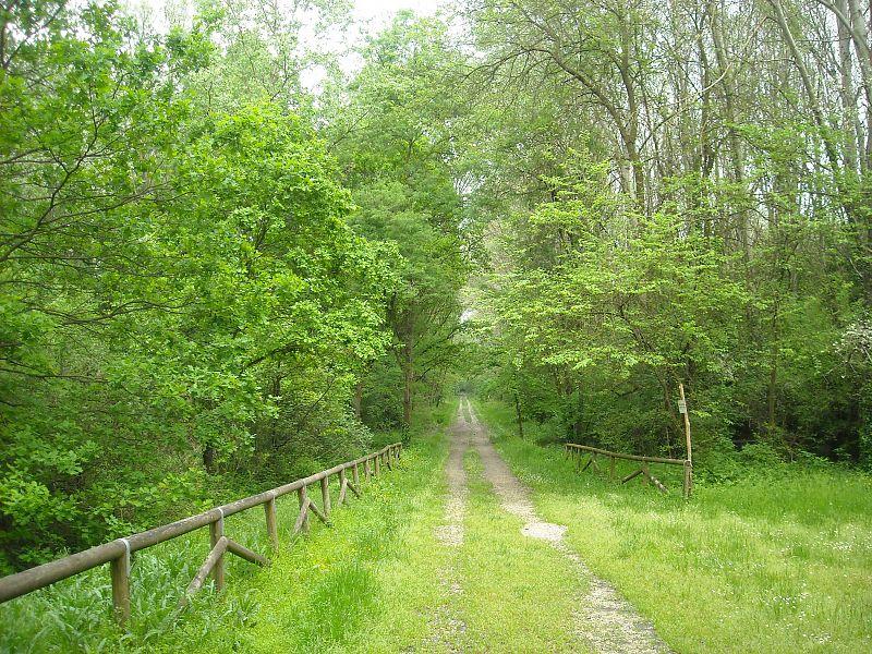 Macabra scoperta nel bosco: ragazzini trovano cadavere in decomposizione