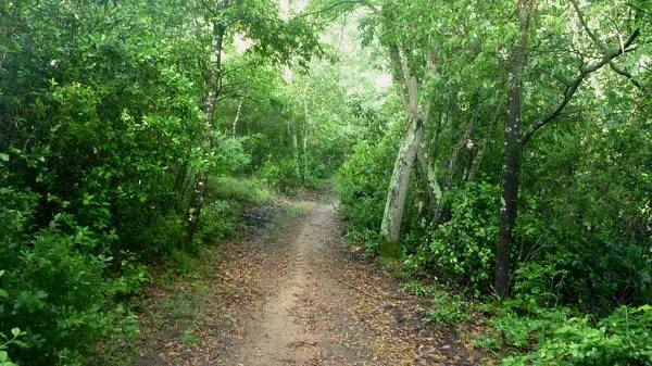 Dai boschi di scarlino spunta un eremita attualit scarlino for Mondo convenienza scarlino