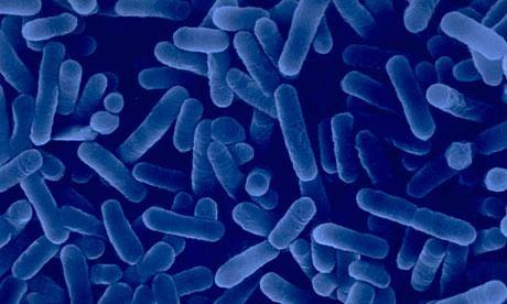 Legionella nell'impianto idrico, stop a una palestra di Prato