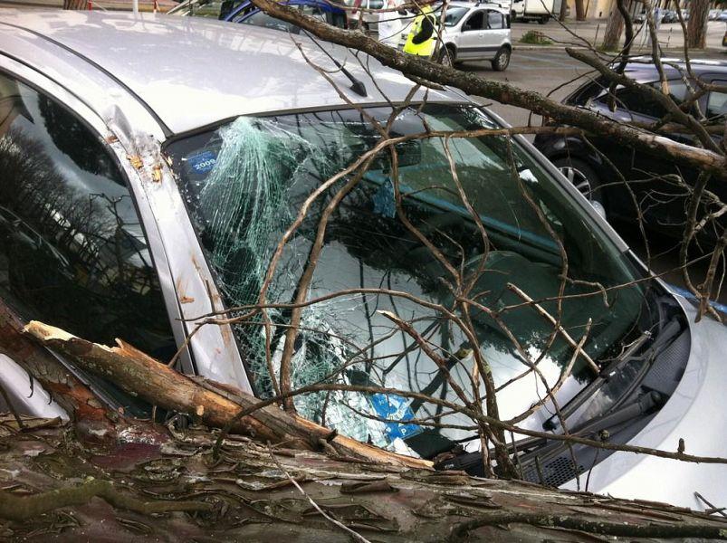 Cade albero su auto a Firenze, conducente ferito