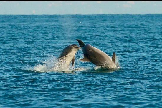 Giochi dei delfini gratis