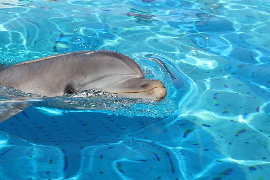 Favoloso Festa di benvenuto per la delfina Mia | Attualità RICCIONE HO74