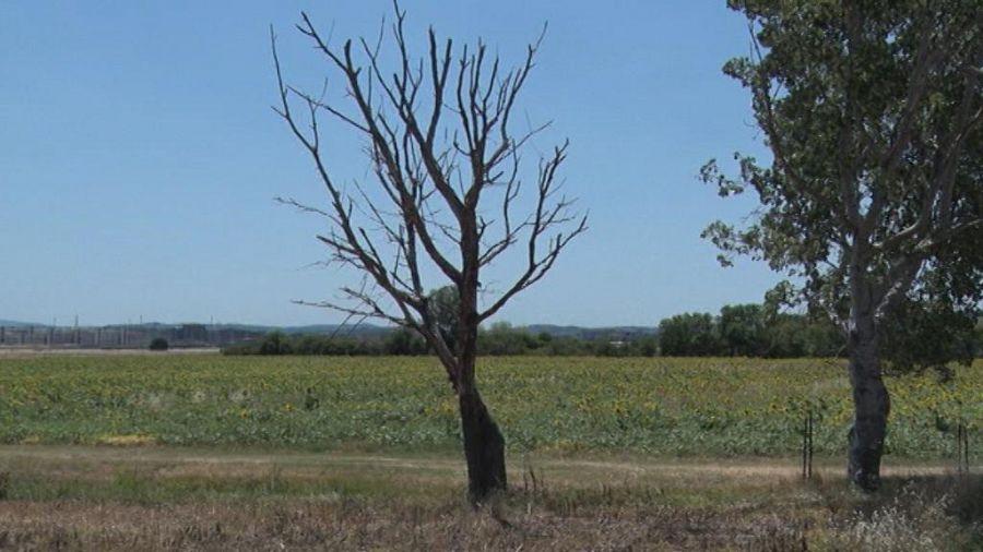 Allarme siccità, ordinanza del sindaco per l'uso dell'acqua