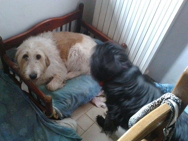 Birillo il cane innamorato ha trovato casa altri - Portare il cane al canile ...