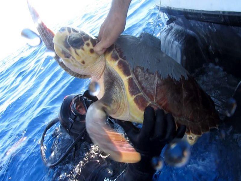 Per le tartarughe di mare il solleone femmina for Tutto per le tartarughe