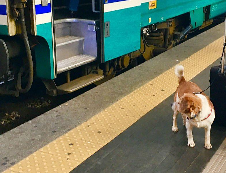 Il cane sparisce dal treno, il padrone è disperato