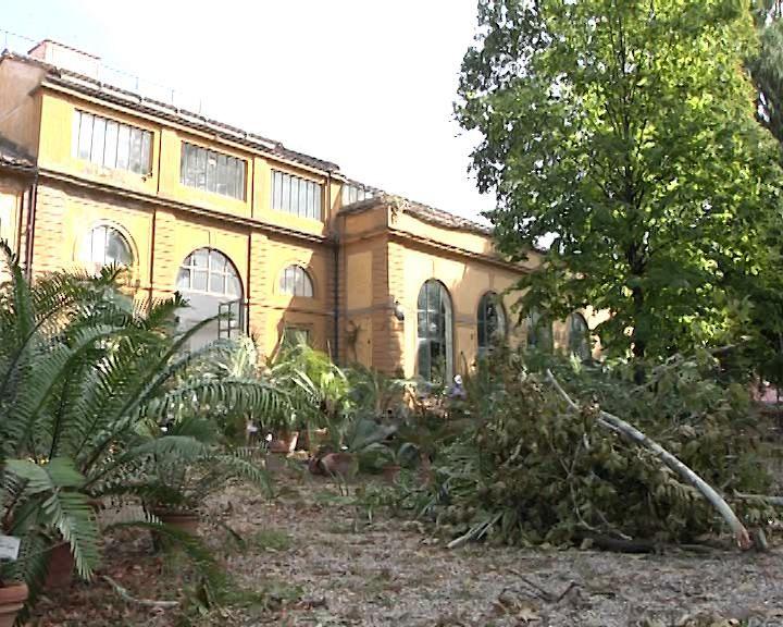 Dopo la devastazione riapre l 39 orto botanico attualit for Giardino orto botanico firenze