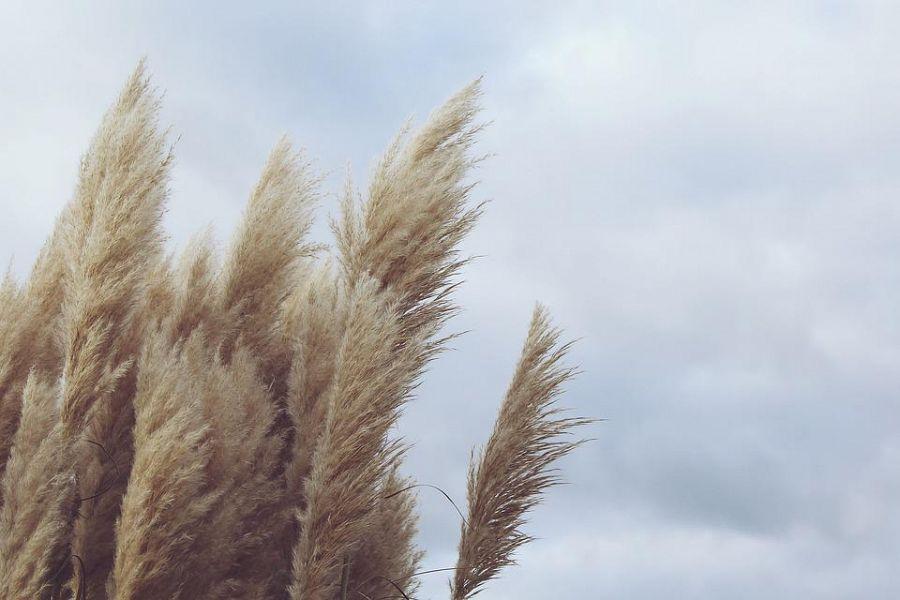 Maltempo: allerta per il vento in Toscana