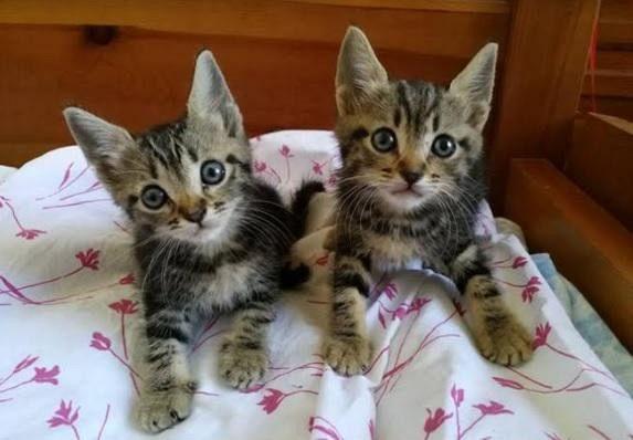 Quattro gattini in cerca di casa attualit cecina for I gattini piccoli