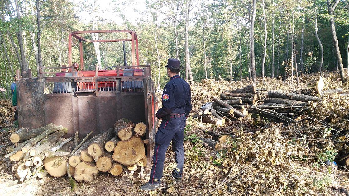 A lavoro nei boschi senza permesso di soggiorno   Cronaca ...