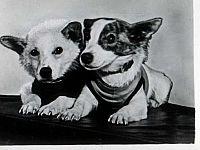 Belka e Strelka in una foto d'epoca (sovieteramuseum.com)