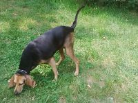 Muso e lingua sono i punti di maggior pericolo per il cane