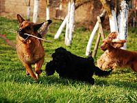 Per il cane è fondamentale il gioco coi suoi simili