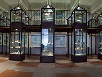 Museo archeologico del Distretto minerario, Rio nell'Elba