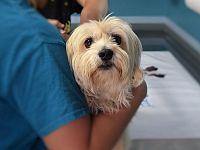 Va portato regolarmente dal veterinario