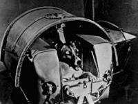 Laika nello Sputnik