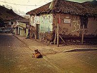 Un cane randagio indica situazione di abbandono