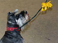 Un fiocco giallo rende i cani speciali