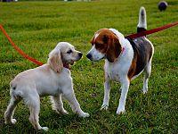 Al guinzaglio i cani possono essere liberi di fare tutto ma in sicurezza