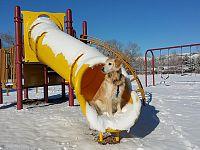 Mai troppo freddo per giocare al parco