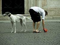 Raccogliere le feci del cane, un gesto indispensabile