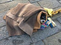 Il cane salvato in mare