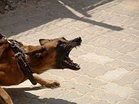 Il guinzaglio serve anche a contenere il cane