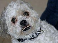 Il cane aggressivo rappresenta qualcuno di negativo