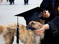 Aumenta l'offerta formativa per lauree in... cane