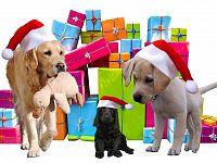 Cani sotto l'albero, riflettiamoci bene