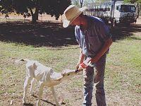 Beryl da vitellina