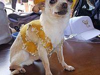 Speedy gonzales (Scratty, 8 anni)