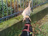 Cane e gatto nella cabala e 65