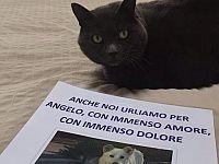 Anche i gatti #unitiperangelo